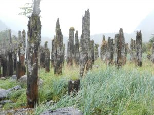 Grove of pilings from when this was a 1200-person town